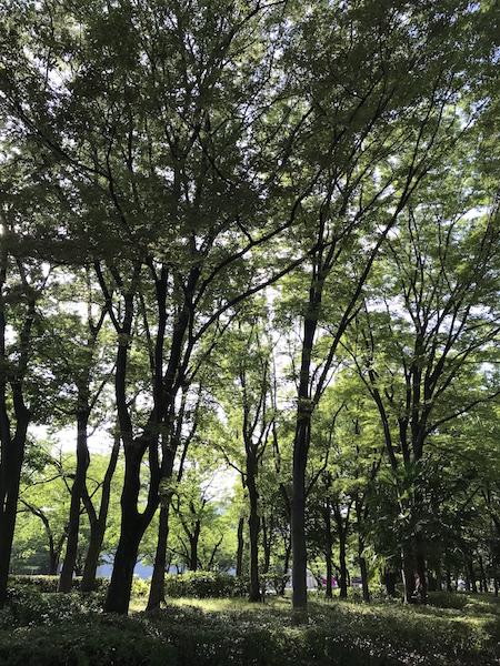 神宮東公園